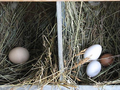 1st eggs 5-31 and 6-1-08