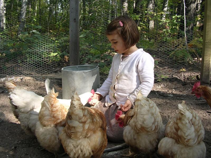 My_flock